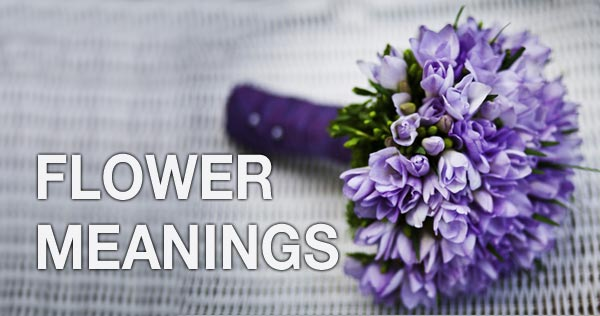 flower_meanings